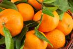 Mandarin Oil (Citrus nobilis) 84